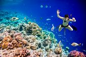 Snorkeler diving along the brain coral. Maldives Indian Ocean coral reef. poster