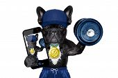 dog as gym and personal trainer with gold medal making a selfie as a poser lifting a dumbbell poster