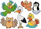Cute birds collection 2 on white background - vector illustration. poster