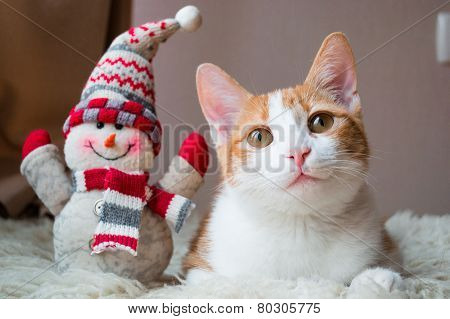 Red cat siting near snowman