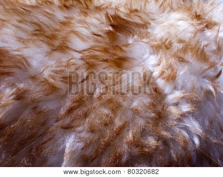 Sheep Wool Skin