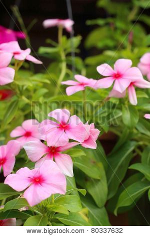 Pink orchids in the nature at the park poster