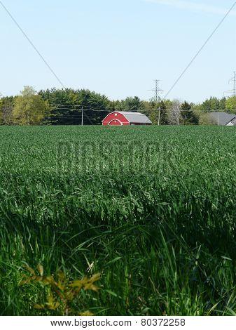 Red barn and green cornfield, near Stratford, Ontario, Canada