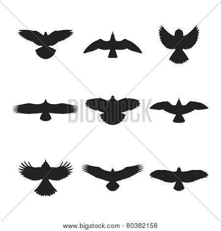 Flying Bird Silhouettes Set