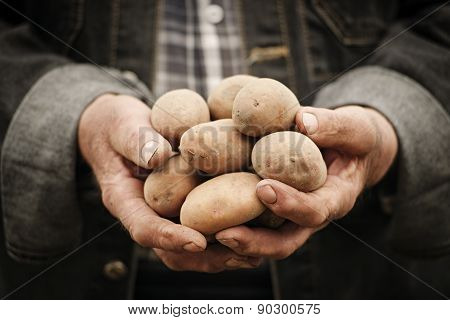 Close-up Of Male Hands Holding A Potato