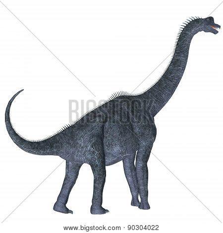 Brachiosaurus Over White