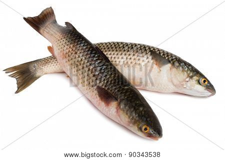 Freshly caught sea fish Mullet or Haarder, isolated on white poster