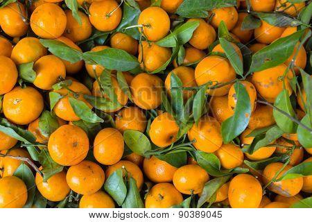 Mandarin Orange Pattern