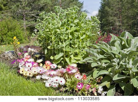 A bunch of Dorotea-flower and Hylotelephium telephium.