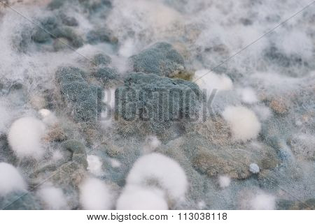 Macro Of Mold Relief Background