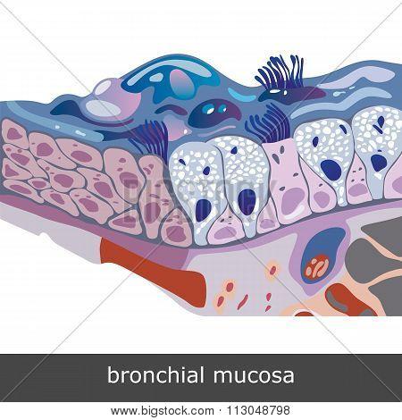 Bronchial Mucosa Scheme