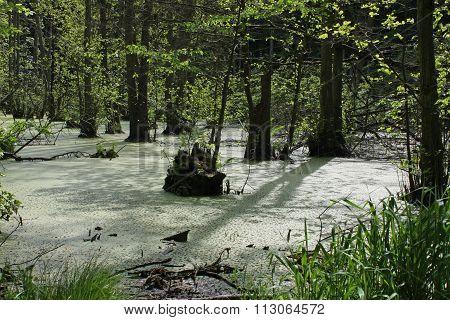 Marsh Landscape, Isle of Ruegen