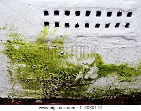 green mold on white wall vent