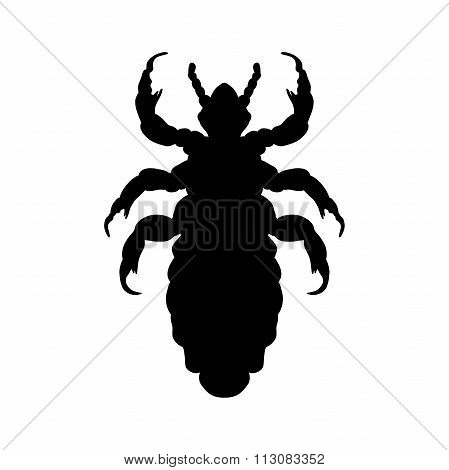 Silhouette Of  Head Human Louse. Pediculus Humanus Capitis. Louse  Silhouette Isolated On White Back