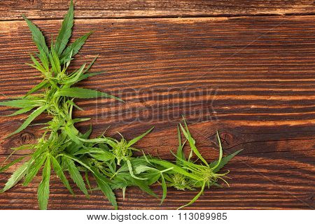 Cannabis Bud Wooden Table.