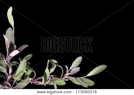 Sage Background With Copy Space.