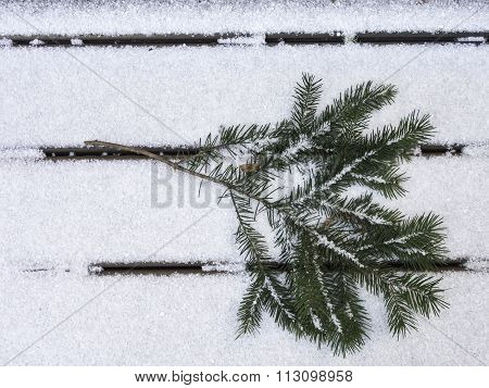 Douglas Fir Branch On Snow Facing Right