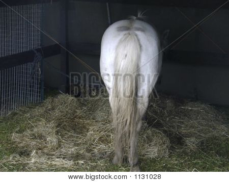 Horse In Normandy