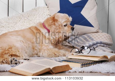 Dog with books on sofa inside
