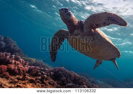 Close up underwater shot of the turtle in the clear sea
