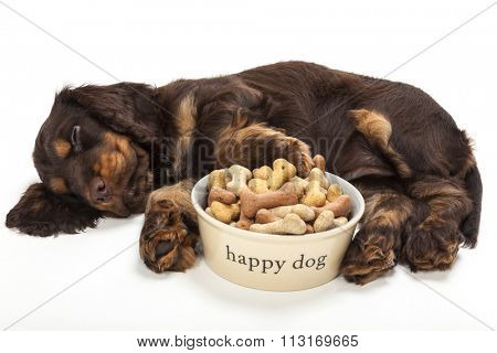 Cute Cocker Spaniel puppy dog sleeping by Happy Dog bowl of boned shaped biscuits