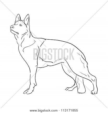 Hand drawn German Shepherd dog. Sketch vector illustration