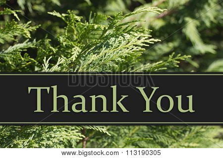 Thank You Message Evergreen Background with text Thank You poster