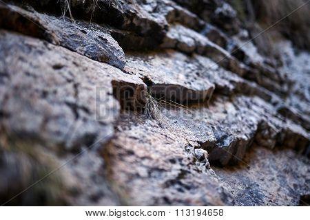 Sedimentary Rocks Background