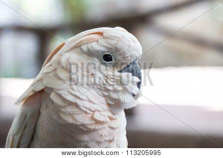 Parrots ,parrots Court ,colorful Parrot ,beautiful Parrots,parrots Looking,parrots Sitting,animals,b
