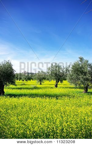 Landscape Of Alentejo Region, Portugal.