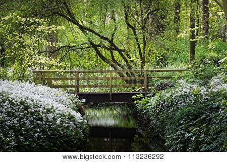 Bridge Over The River And The Blooming Wild Garlic (allium Ursinum) In Stochemhoeve, Leiden, The Net