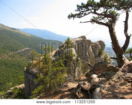 Landscape in hills. Pine tree on the rock on top of hill view on sea shore. Recorded in hills of Crimea on Black sea in Ukraine.