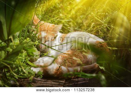 Red cat sleeping.