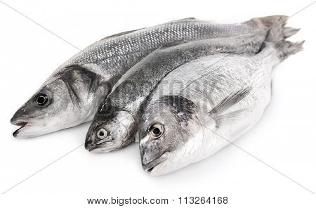 Fresh fish in a row isolated on white background