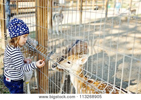 Girl In Zoo