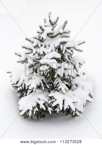 Small Decorative Tree In The Snow