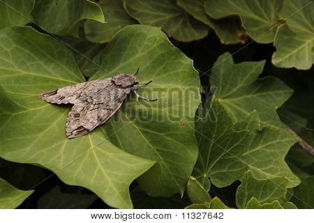 A moth on green leaves