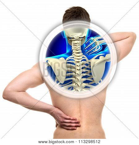 Cervical Spine Isolated On White - Real Anatomy Concept