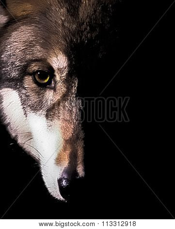 Duality of the Wolf