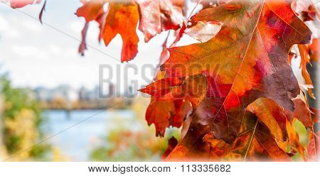 Red oak leaf foreground, city of Ottawa blurred background.