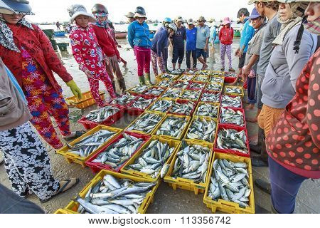 Auctions fish markets in coastal fishing villages
