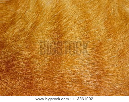 the texture of the fur