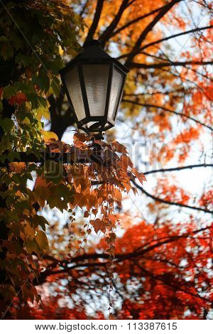 Street Lamp With Autumn Leaves