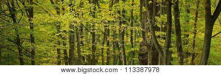 Beautiful Multicolored Foliage In Forest