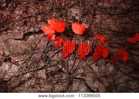 Red Leaves On Grey Wall