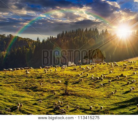 Flock Of Sheep On The Meadow Near  Forest In Mountains At Sunset