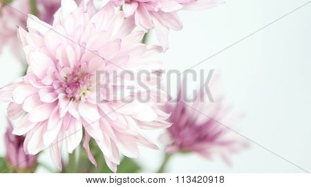 Pink and white flowers.