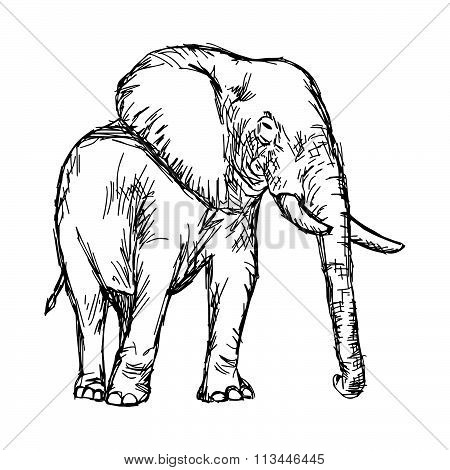 Illustration Vector Hand Drawn Doodle African Elephant Isolated On White
