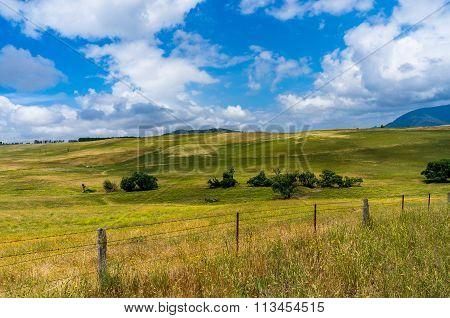 Beautiful summer paddock. Rural australian landscape in sunny day