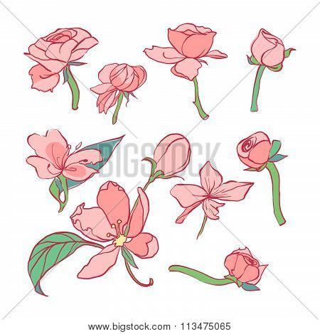 Foral set with tender flowers. Beautiful flowers. Delicate wedding set of flowers. Line art.
